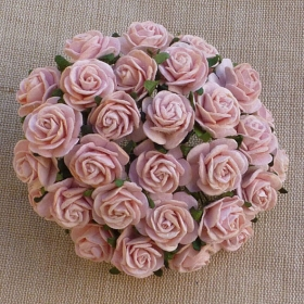 Avatud õiega roos